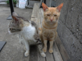 Cats of Houtong, #4585