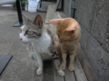 Cats of Houtong, #4586