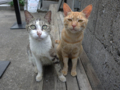 Cats of Houtong, #4587
