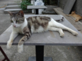 Cats of Houtong, #4592