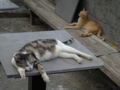 Cats of Houtong, #4604
