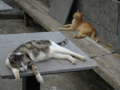 Cats of Houtong, #4605