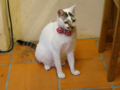 Cats of Houtong, #4622