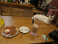 Cats of 217Cafe, #1298