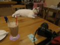 Cats of 217Cafe, #1300