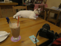 Cats of 217Cafe, #12301