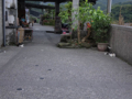 Cats of Houtong, #4638