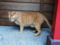 Cats of Houtong, #4642