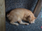 Cats of Houtong, #4649