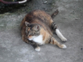 Cats of Houtong, #4654