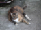 Cats of Houtong, #4655
