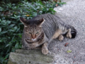 Cats of Houtong, #4660