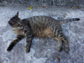 Cats of Houtong, #4664