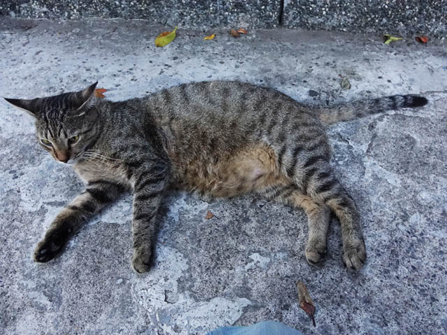 Cats of Houtong, #4665