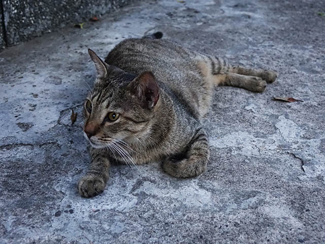 Cats of Houtong, #4667