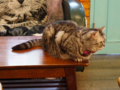 Cats of Cat's Buddy Cafe, #4679