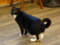 Cats of Cat's Buddy Cafe, #4680