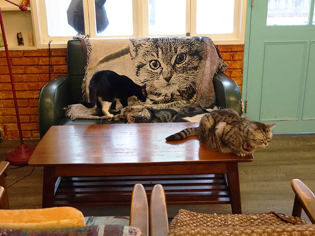 Cats of Cat's Buddy Cafe, #4681