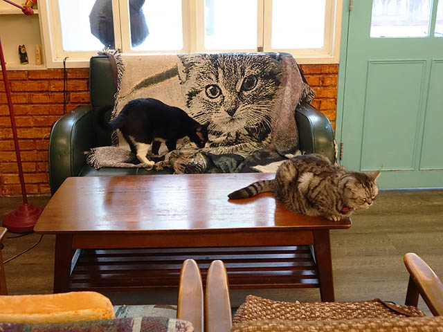Cats of Cat's Buddy Cafe, #4682