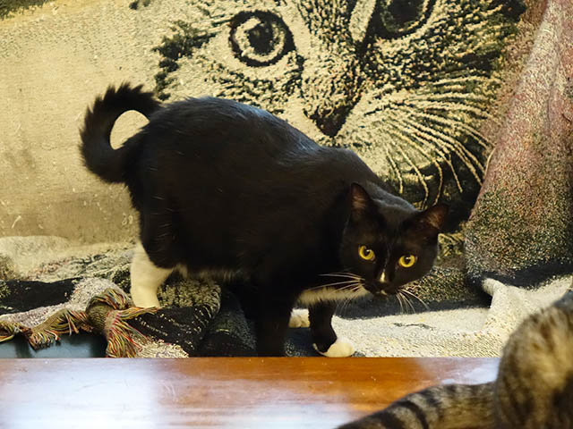 Cats of Cat's Buddy Cafe, #4684