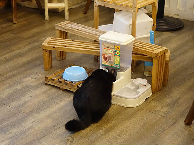 Cats of Cat's Buddy Cafe, #4686