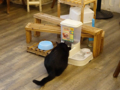 Cats of Cat's Buddy Cafe, #4687