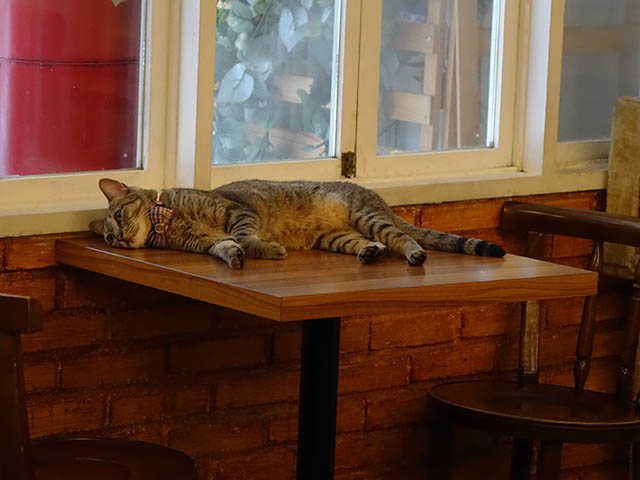 Cats of Cat's Buddy Cafe, #4699