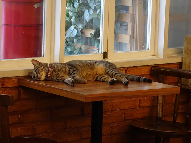 Cats of Cat's Buddy Cafe, #4700