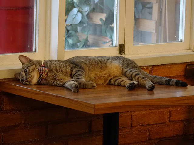 Cats of Cat's Buddy Cafe, #4701