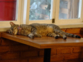 Cats of Cat's Buddy Cafe, #4702