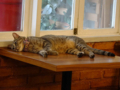 Cats of Cat's Buddy Cafe, #4703