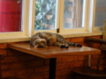 Cats of Cat's Buddy Cafe, #4704