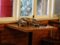 Cats of Cat's Buddy Cafe, #4705