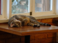 Cats of Cat's Buddy Cafe, #4706