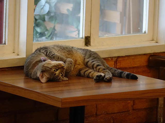 Cats of Cat's Buddy Cafe, #4711