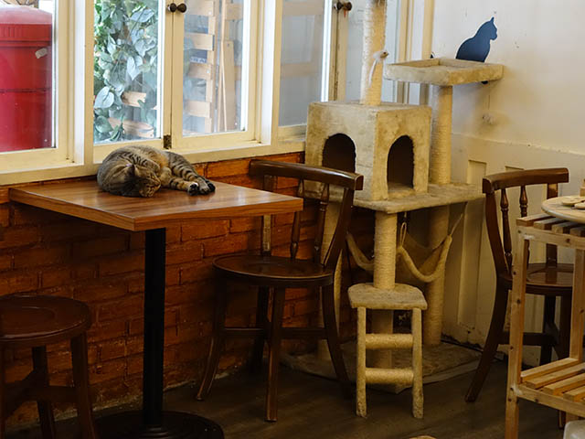 Cats of Cat's Buddy Cafe, #4712