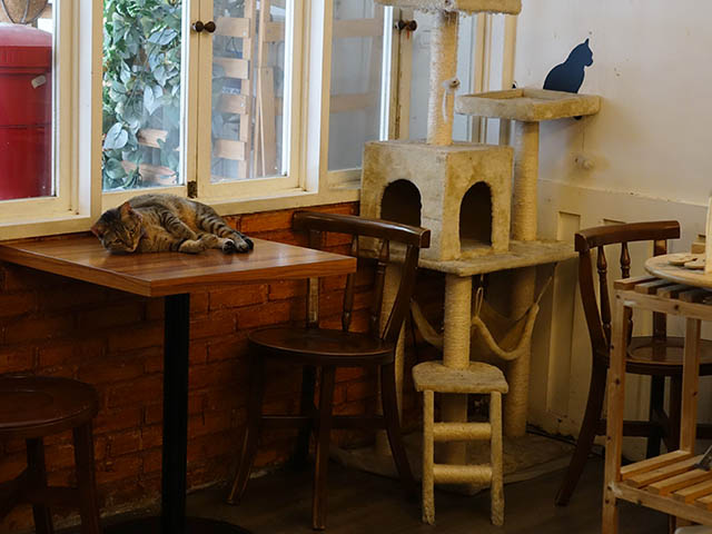Cats of Cat's Buddy Cafe, #4713