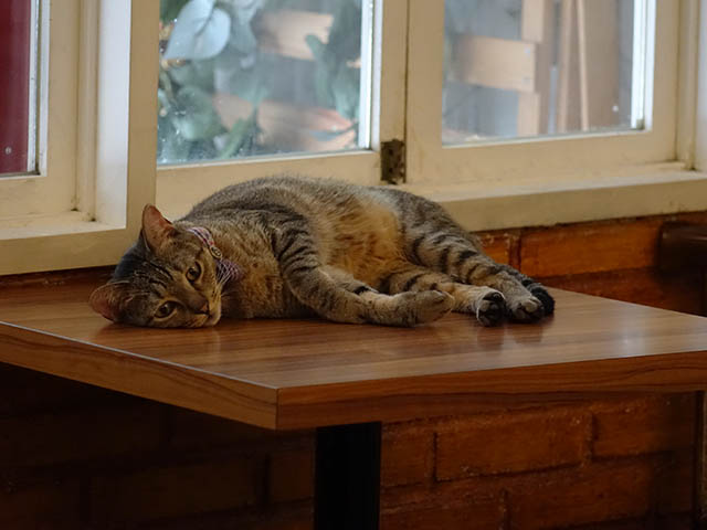 Cats of Cat's Buddy Cafe, #4714