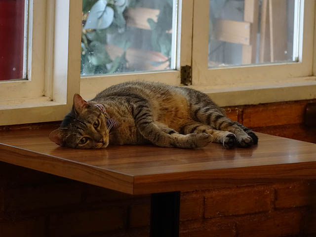 Cats of Cat's Buddy Cafe, #4715