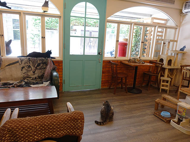 Cats of Cat's Buddy Cafe, #4716