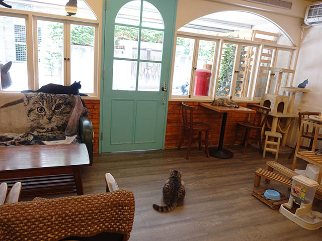 Cats of Cat's Buddy Cafe, #4717
