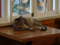 Cats of Cat's Buddy Cafe, #4720