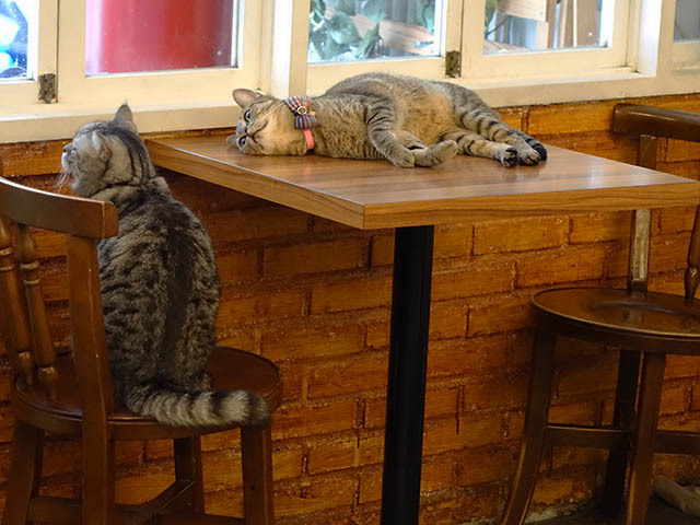 Cats of Cat's Buddy Cafe, #4721