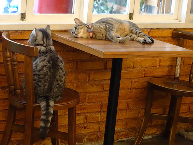 Cats of Cat's Buddy Cafe, #4723