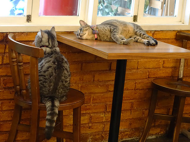 Cats of Cat's Buddy Cafe, #4724