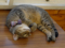 Cats of Cat's Buddy Cafe, #4727