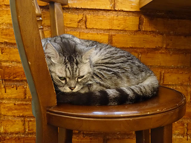 Cats of Cat's Buddy Cafe, #4728