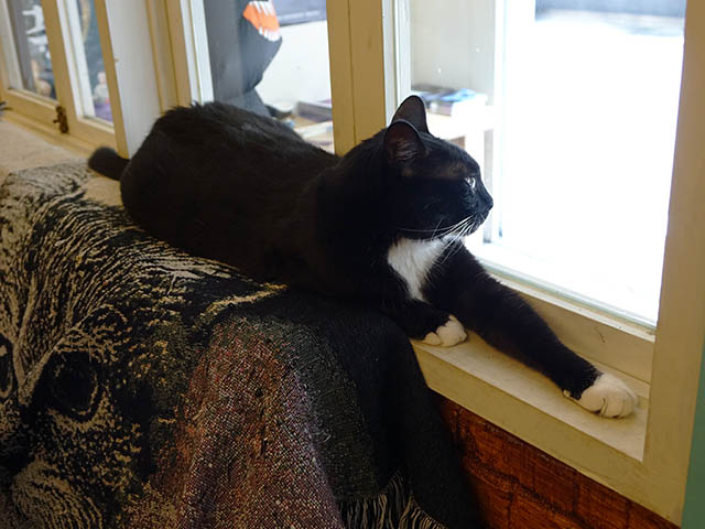 Cats of Cat's Buddy Cafe, #4731