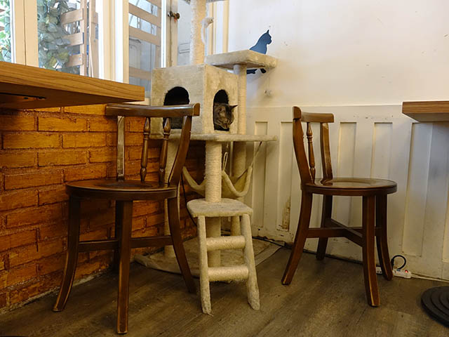 Cats of Cat's Buddy Cafe, #4737