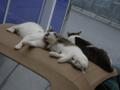 Sora, Koyuki & Hoshi, #5132